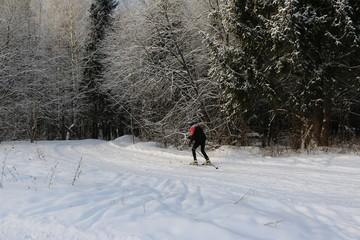Лыжник на лесной лыжне зимним днем