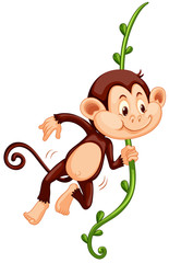 Cute monkey climbing up the vine