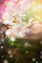 Spring nature background with blossom tree branches and white flowers in garden or park