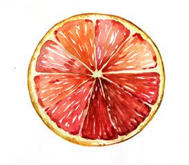 grapefruit orange red watercolor