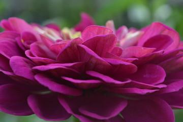 Красивый цветок. Макро