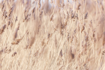 Background of dry grass