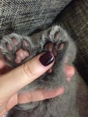 лапки котенка