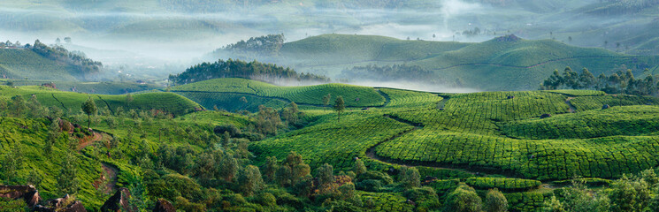 Green hills of tea plantations in Munnar Fotomurales