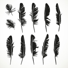Silhouettes feathers vector illustration