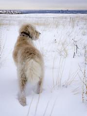 Winter Dog Above Denver