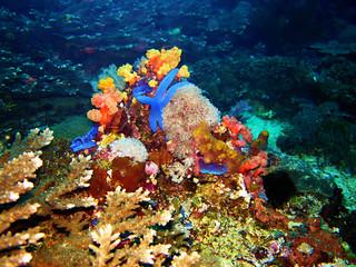 starfish, Coral Sea, Bali, Indonesia