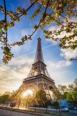 Fotobehang Parijs Eiffel Tower with spring tree in Paris, France