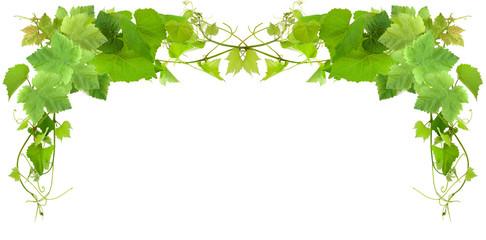 Wall Mural - bordure de feuilles de vigne, fond blanc
