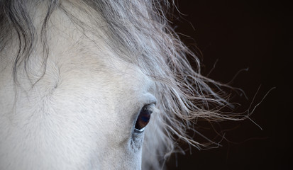 Beautiful eye of the white horse