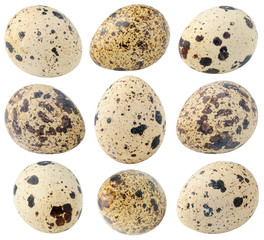 Collection of isolated quail eggs