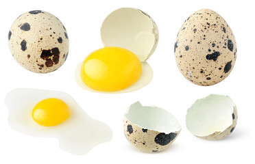 Whole and broken quail eggs collection