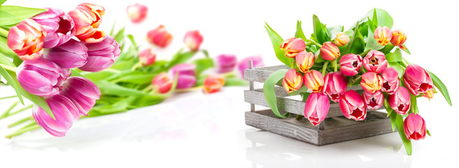 Tulpen, Holzkiste, isoliert, Banner