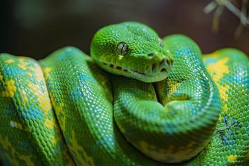 My Python.