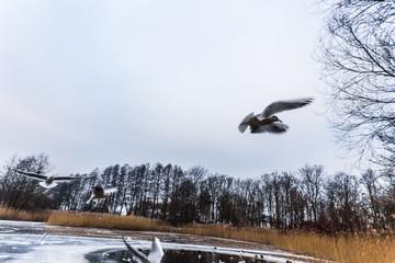 viele vögel am teich