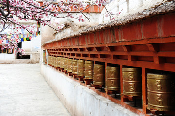 Religious prayer wheels and beautiful Apricot flower in the old