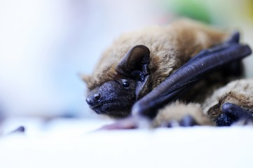 Bats colony kept in laboratory for research