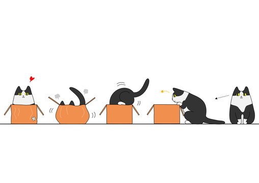 Cat going into a box
