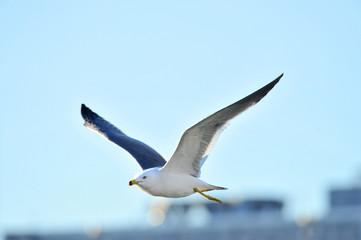 華麗でエレガント,俊敏で神々しい鴎の飛翔スタイル