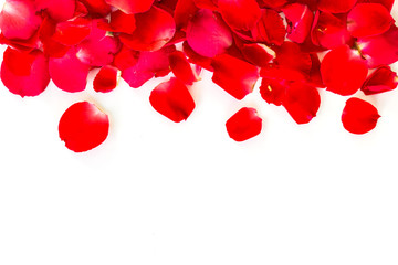 red rose petals on white background. valentine`s card background