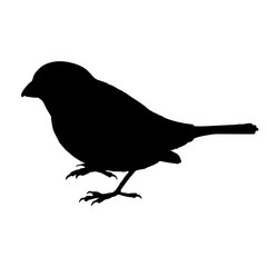 Sparrow Birds Silhouettes Vector EPS 10