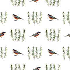 Birds and rosemary. Handmade watercolor floral seamless pattern, isolated on white background. Fabric texture. Herbs vintage design.