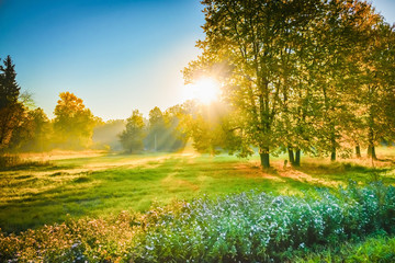 Canvas Prints Honey ray of sunshine through the tree