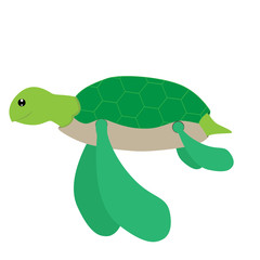 vector illustration of sea turtle on white background
