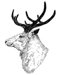 drawing of wild deer