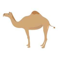 An isolated and colorful cartoon of a camel - Eps 10 vector and illustration