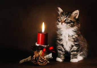 Fluffy kitten sitting next to a Christmas candle. Brown backgrou