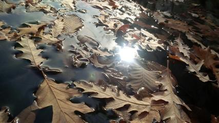 foglie nell'acqua