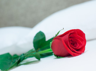 Closeup photo of red rose lying on bed.
