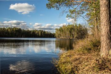 Summer in Finnish forest