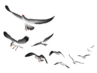 flying seagulls vector Illustration isolated on white background