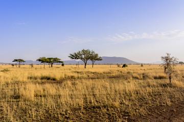 Fotomurales - タンザニアのセレンゲティ国立公園