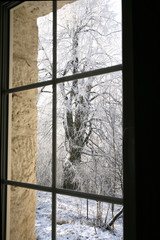 Old, country home windows with winter view of snowy tilia trees.