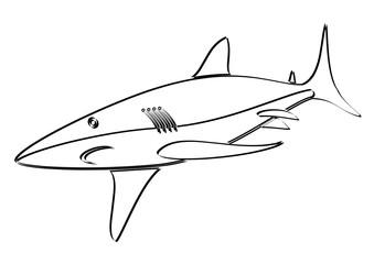 Esquisse d'un requin
