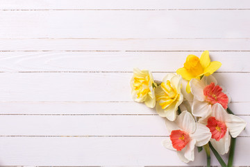 Yellow and pink narcissus flowers  on white  painted wooden back