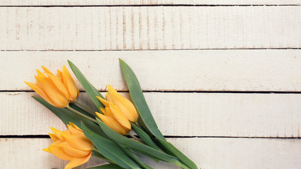 Yellow tulips flowers on white  painted wooden planks.