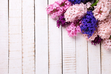 Background with fresh pink, violet, blue, purple hyacinths on wh
