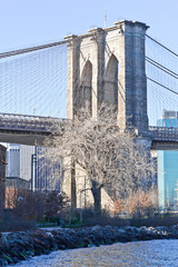 Dry tree in front of Brooklyn Bridge at New York