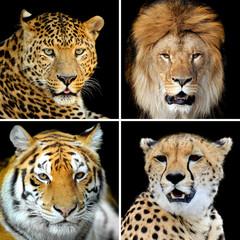 Four big wild cats
