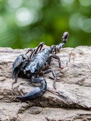 Closeup view of a scorpion in nature.