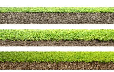 Wall Mural - grass with roots and soil