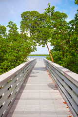 Mangrove trees and pedestrian bridge path in Florida Keys, beautiful nature in the park on a summer day