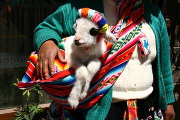 Lämmchen in peruanischer Tracht, Peru