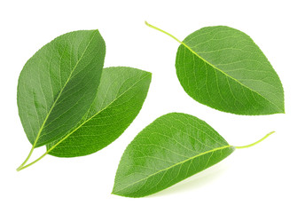 Pears leaves isolated on a white background