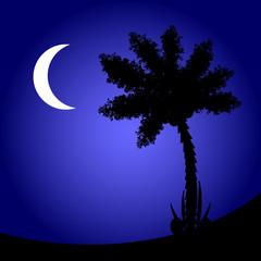 Palm tree at night.