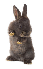 one black rabbit